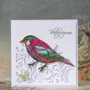 Ptacci - 6