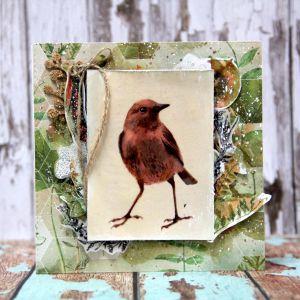 Ptaci - 1